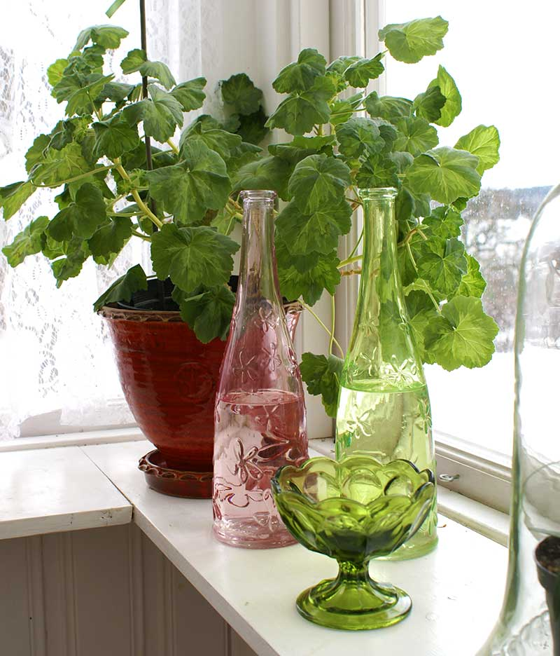 Vattenflaskor på fönsterbrädan för hög luftfuktighet