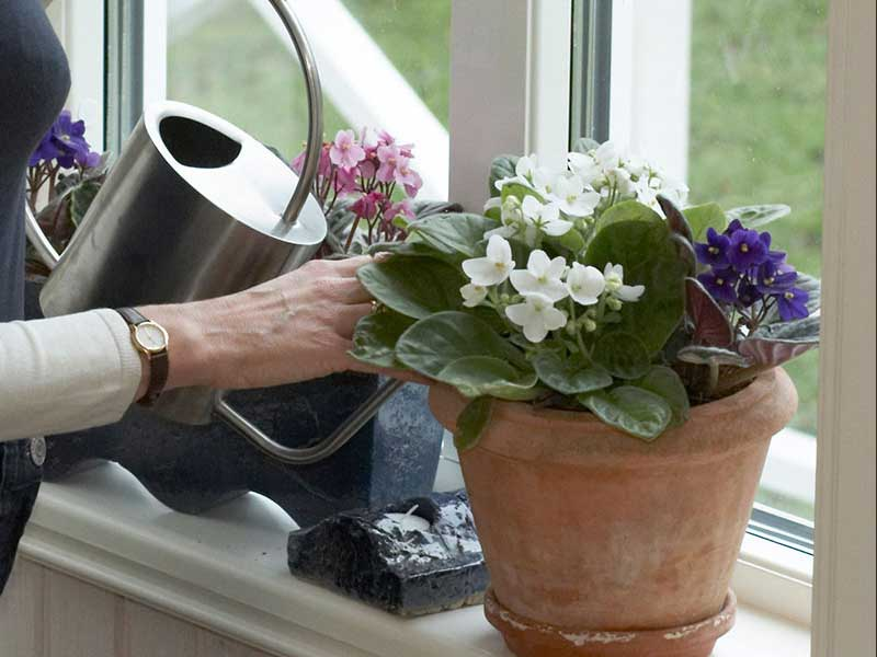 Vattning av krukväxter på vintern