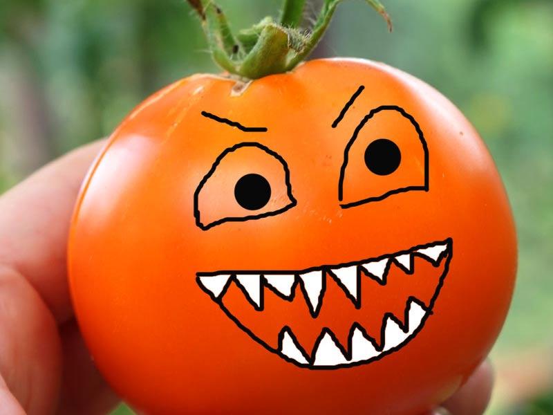 Tomat - en köttätande växt!