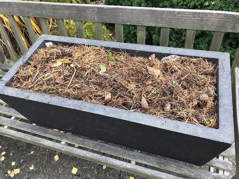 Övervintring av knölväxter i isolerande kruka med barr och kottar