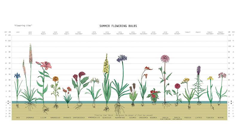 planteringsdjup för olika sommarblommande lök- och knölväxter
