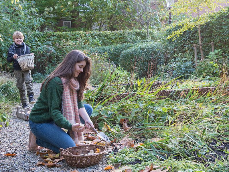 Plantering av lökar på hösten i trädgård