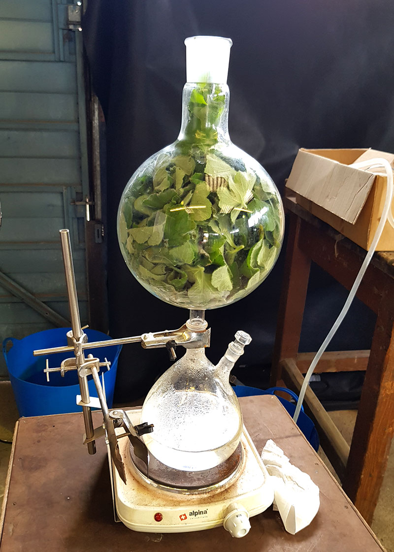 Destillering av doftpelargon