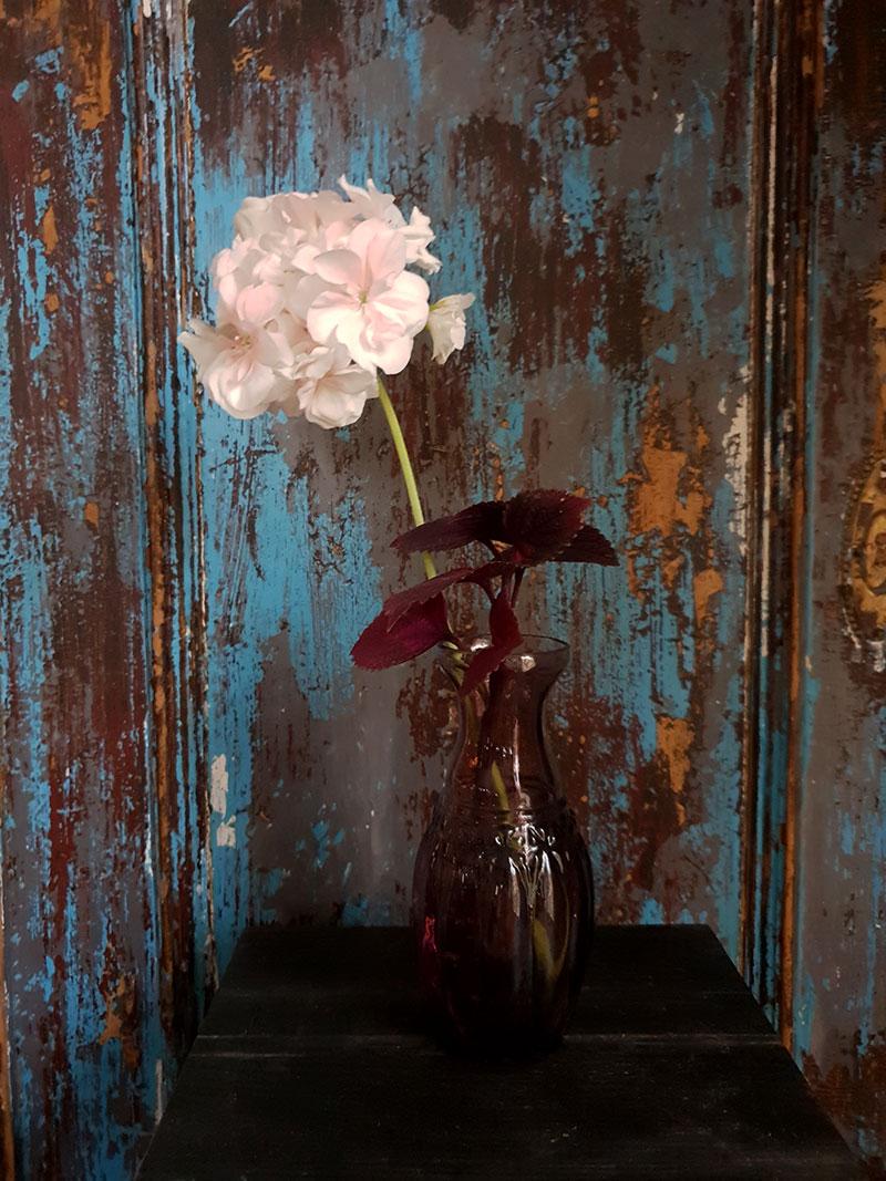 Mårbacka pelargon med palettblad i arrangemang tillsammans i vas