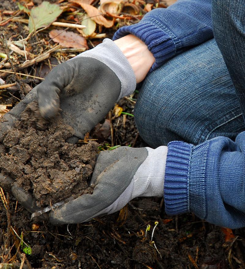 Smulig mullrik jord för plantering av perenner