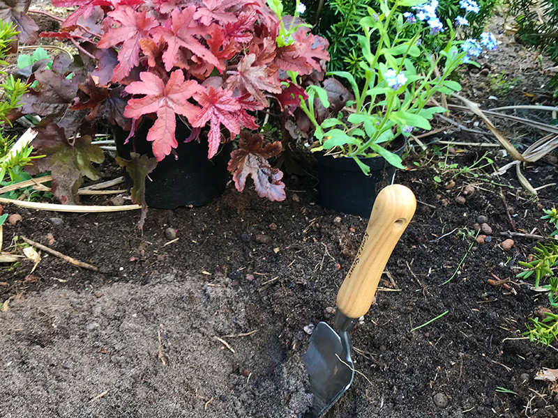 Plantering av perenner