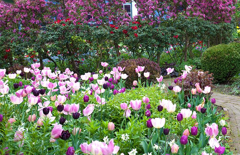 Lökväxter och perenner i sämplantering
