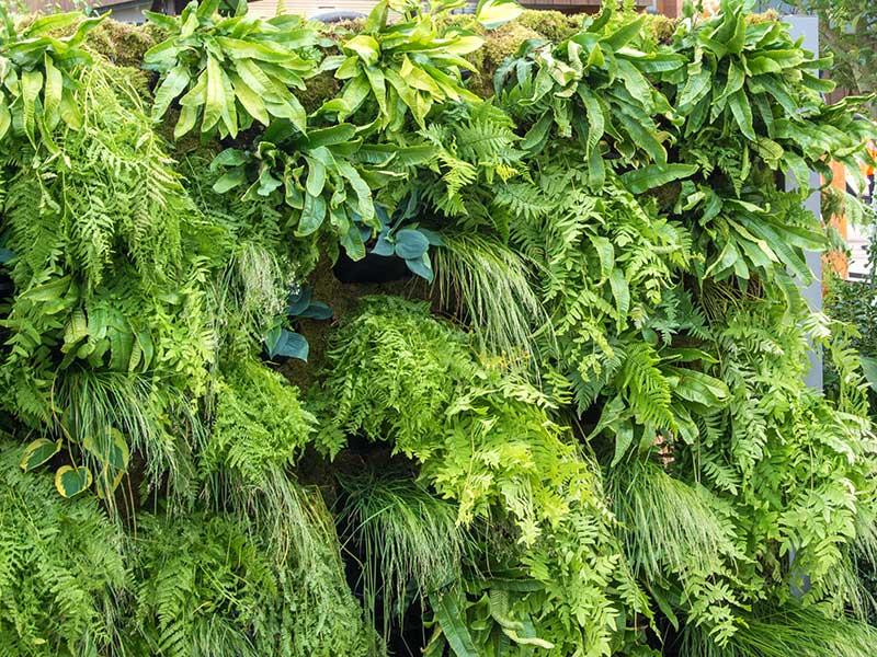 Frodig grön vägg mer perenner