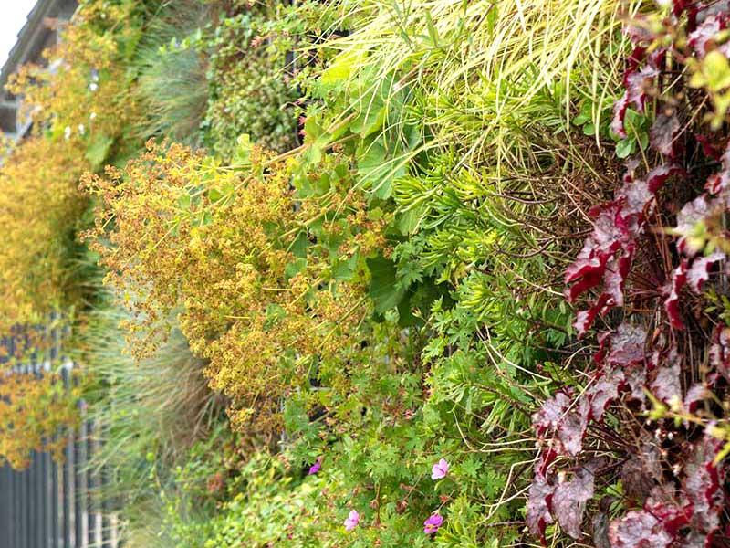 Vintergrön växtvägg med perenner