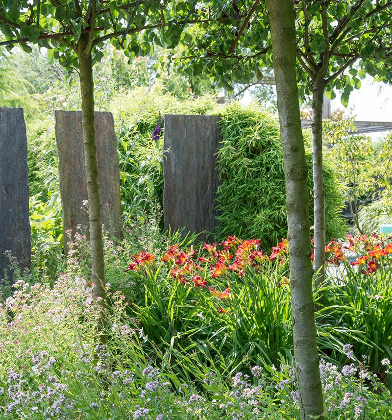 Dagliljor i halshugga under träd i trädgård