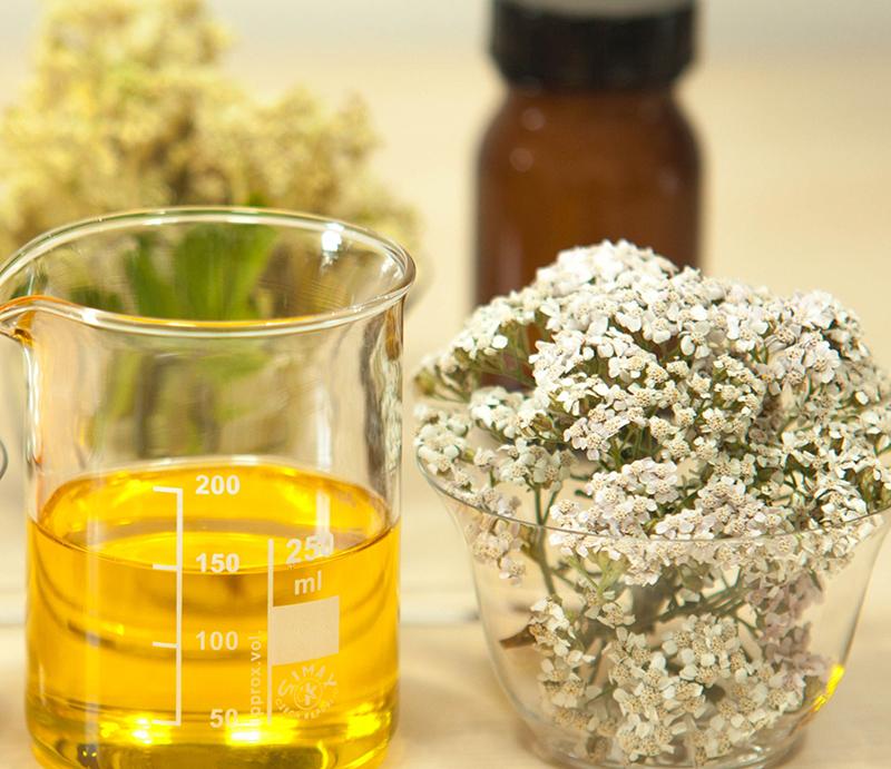 Oljeextrakt av röllika som kramplösande örtmedicin