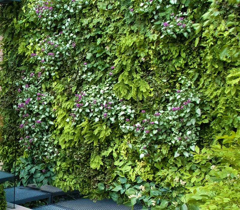 VÄxtvägg utomhus med perenner ormbunke och plister