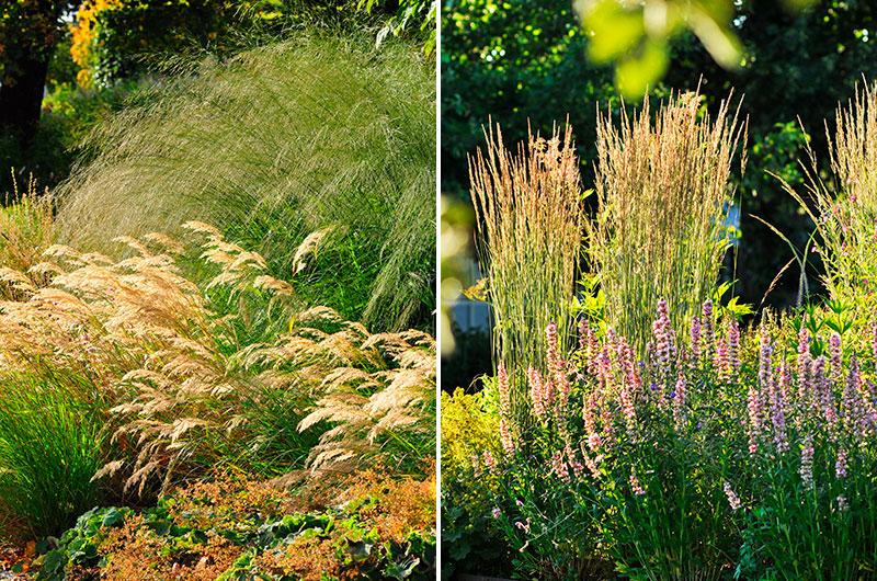 Olika planteringsavstånd för prydnadsgräs