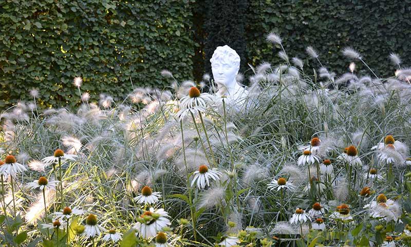 Vit solhatt med prydnadsgräs fjäderborstgräs Pennisetum