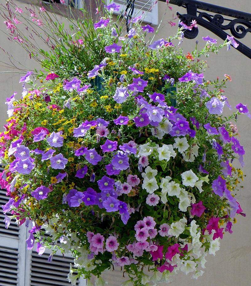 hanging basket med petunia och sommarljus