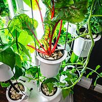 Nutritower odlingstorn, mangold och grönsaker