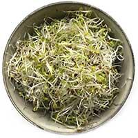 Broccolifrön