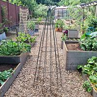 Växtstöd i köksträdgård