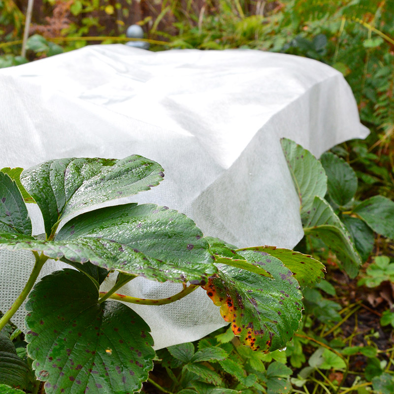 Kraftig fiberduk till växter 30g, 16kvm