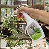 Grönsåpa spray mot bladlöss