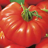 Frö till Bifftomat, Solanum lycopersicum 'Buffalosteak' F1