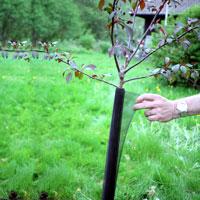 Fjädrande stamskydd för träd