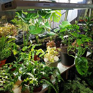 Lightwave växtbelhysning för inomhusodling