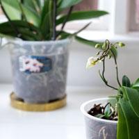 Orkidékrukor i 17 och 12 cm.