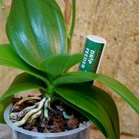 Orchid Focus droppnäring i orkidekruka