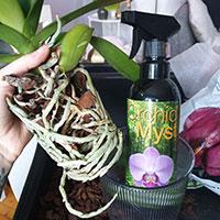 Orkidénäring att spraya på rötterna