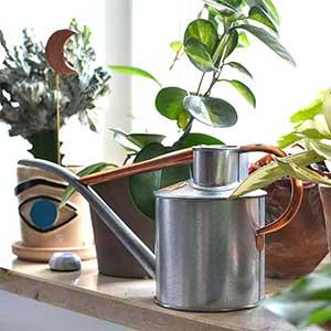 Haws vattenkanna i zink och koppar med krukväxter