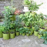 Vigoroot odlingssackar i olika storlekar