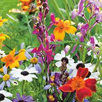 Blomstermix med snittblommor