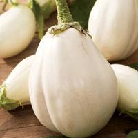 Frö till Äggplanta, Aubergine 'Clara F1', ekologisk