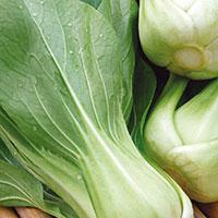 Frö till Sellerikål, pak choi 'Green Revolution' F1, Brassica rapa