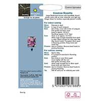 Odlingsråd för Rosenskära 'Rosetta Pink Stripe'