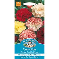 Trädgårdsnejlika 'Choice Double Mixed', Dianthus caryophyllus