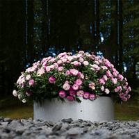 Växtodling med cirkelformad trädgårdskant