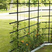 Växtspalje för vägg och fristående
