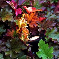 Rabattbelysning Luminus Plus - LED Garden Plug & Play