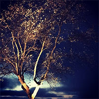 Sirius - LED Garden Plug & Play belysning på träd