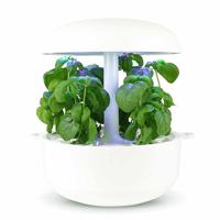 Frökapsel till Smart Garden inomhusodling - Basilika Genovese