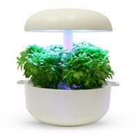 Frökapsel till Smart Garden inomhusodling - Ocimum basilicum - Minette