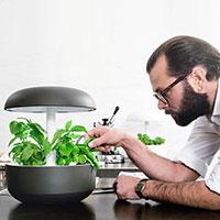 Kock plockar basilika från grå Plantui Smart Garden