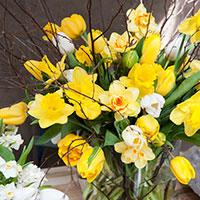 Narciss 'Tahiti' och tulpaner i vas