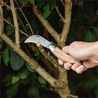 Beskärning av gren med beskärningskniv