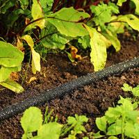 fuktslang för bevattning i trädgården, bild 3