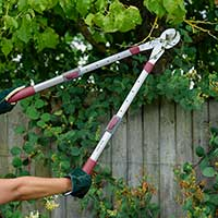Beskärning med mothållssekatör med teleskophandtag