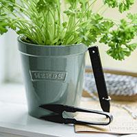 Örtkruka 'Gardener's Pot'