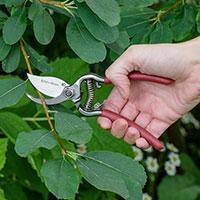 Tvåskärssekatör, Garden Life, 10 mm
